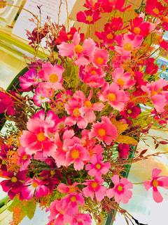 花,コスモス,室内,多色