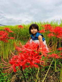 空,花,赤,子供,女の子,人,彼岸花,曇り空,朝,稲,秋空