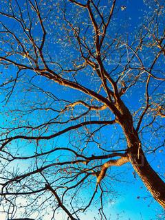 空,秋,木,野外,秋空