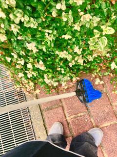捨てられないブルーのホウキ。私の相棒‼️の写真・画像素材[1511863]