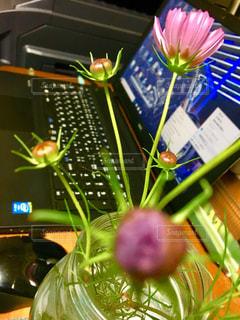 花,コスモス,パソコン,PC,飾り,癒す