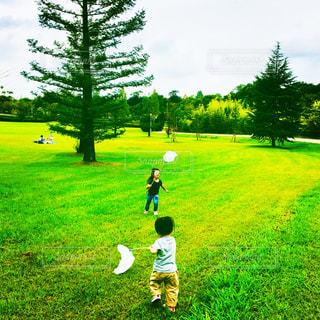芝生,子供,女の子,人,トンボ,網,男の子,可能性,虫採り