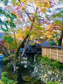 松尾寺の写真・画像素材[1621267]