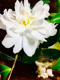 花,白,景色,ぬいぐるみ,ホワイト,ツバキ,草木,複数,ウサギ