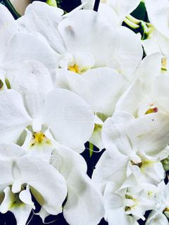 花,屋内,白,装飾,ホワイト,蘭,複数