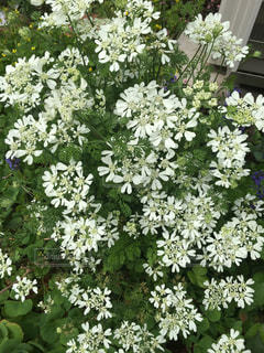 花,屋外,緑,白,景色,ホワイト,草木,小花,複数,ガーデン