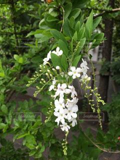 花,屋外,白,樹木,ホワイト,草木,ガーデン