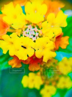 花,庭,黄色,葉,イエロー,複数,アリ,花ランタナ