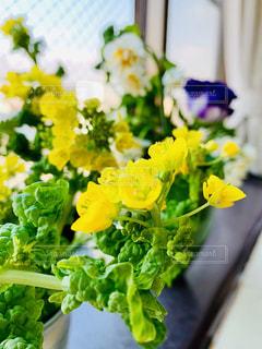 花,植物,黄色,葉,菜の花,イエロー,複数