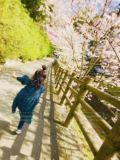 桜,花見,桜並木,子供,女の子,人,坂道,ドット柄