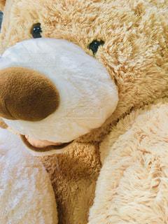 茶色,ぬいぐるみ,大きい,ブラウン,クマ,ミルクティー色