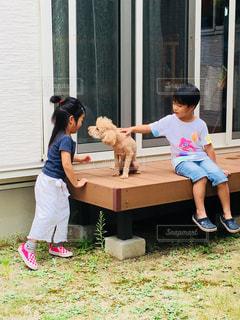 子供,女の子,人,プードル,野外,男の子,ドッグ