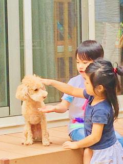 犬,庭,子供,人,プードル,野外,男の子,ドッグ