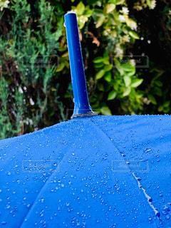 木,雨,傘,屋外,水,野外,雨粒