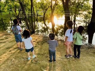 木,太陽,後ろ姿,池,子供,女の子,人,地面,野外,光る,男の子,人間