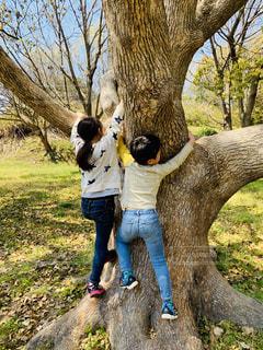 空,公園,木,後ろ姿,大木,人,木登り,野外,人間