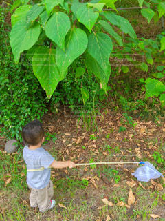 公園,木,後ろ姿,葉,子供,人,網,野外,男の子,人間