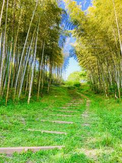竹の香りを楽しみながら。の写真・画像素材[2147115]