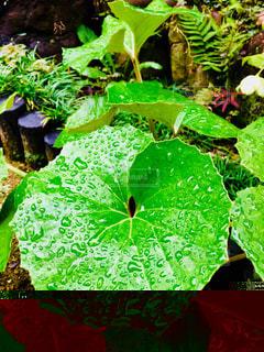 雨,緑,葉,雨粒,シダ