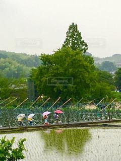 雨だねぇ〜💦の写真・画像素材[2165231]