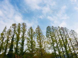 空に向かって‼️の写真・画像素材[2175956]