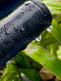 自転車,雨,葉,サドル,梅雨,野外,雨粒