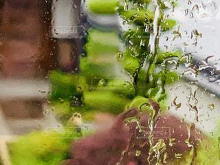 雨,庭,ガラス,しずく