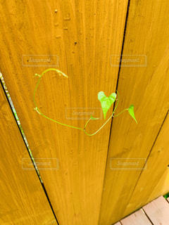 木,緑,かわいい,ハート,隙間,塀,野外,ツル