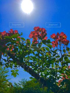 空,公園,花,太陽,青い空,葉,光,薔薇,樹木,眩しい,野外,草木