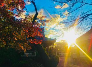 空,紅葉,屋外,太陽,夕暮れ,光,樹木,眩しい,キラキラ,明るい,カエデ
