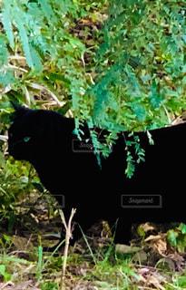 猫,動物,森林,木,屋外,緑,黒,光,草,ペット,人物,黒猫,目,草木,ネコ,緑の目