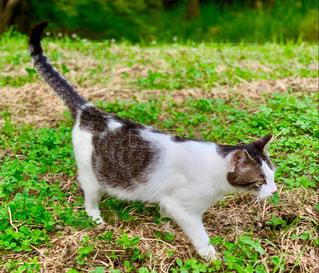 猫,公園,動物,芝生,屋外,緑,白,鮮やか,草,ペット,人物,立つ,しっぽ,野外,ネコ,齧歯動物