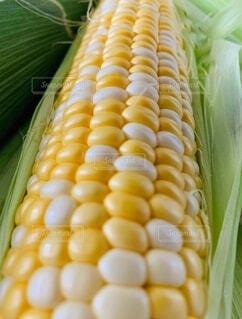 食べ物,屋内,白,黄色,野菜,食品,トウモロコシ,ミックス,食材,フレッシュ,ベジタブル