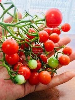 食べ物,風景,カーテン,手,テーブル,トマト,野菜,ミニトマト,食品,たくさん,食材,フレッシュ,ベジタブル