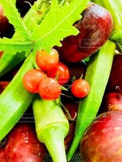 食べ物,風景,葉,果物,トマト,野菜,ミニトマト,食品,オクラ,イチジク,食材,フレッシュ,ベジタブル,いちじく