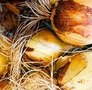 食べ物,野菜,食品,たくさん,新鮮,食材,根,フレッシュ,ベジタブル,タマネギ,とりたて