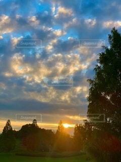 自然,空,木,屋外,太陽,朝日,雲,光,樹木,正月,お正月,日の出,新年,初日の出