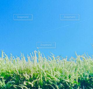 青と白の写真・画像素材[4308507]