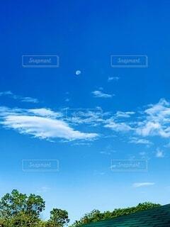自然,風景,空,木,屋外,雲,青い空,景色,樹木,月,朝方