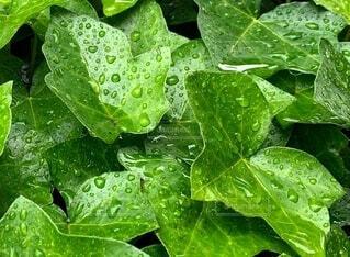 雨に濡れての写真・画像素材[4947351]