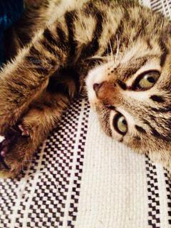 ベッドの上で横になっている猫の写真・画像素材[1259429]