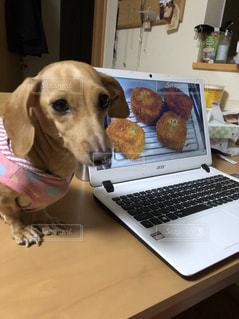 ノート パソコンの前に座っている犬の写真・画像素材[1532085]
