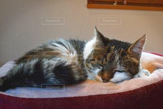 ベッドの上で横になっている猫の写真・画像素材[1226840]