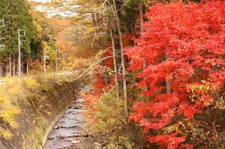 風景,紅葉,屋外,川,樹木,飛騨,岐阜県,古川,卯の花街道