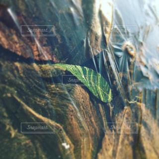 緑 葉っぱ 水 自然 - No.1172361