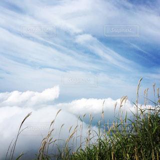空,秋,雲,登山,ススキ,大分,秋空,草木,由布山