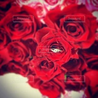 花,赤,バラ,指輪,薔薇,ハート,結婚,マーク,プロポーズ,婚約
