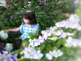 紫陽花と女の子の写真・画像素材[1243324]