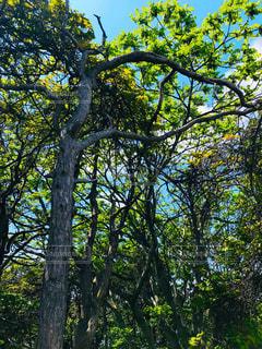 森の木の写真・画像素材[2212813]