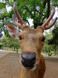 鹿さん...ありがとう。の写真・画像素材[1196878]